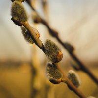Весна :: Sergey Gorelov