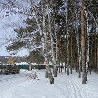 На окраине шли соревнования ...лыжня . :: Мила Бовкун