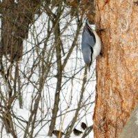 Жизнь птиц в лесу . :: Мила Бовкун