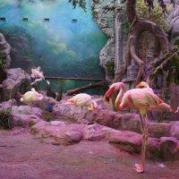 Розовый фламинго :: Елена Павлова (Смолова)