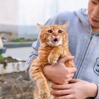 Котик еще в шоке после спасения... :: Елена Васильева