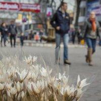 Весна :: Наталья Одинцова