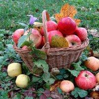 Обычная 1/1000 осеннего урожая... :: юрий