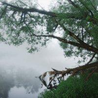 Утро на реке :: sergej-smv