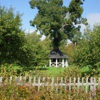 В саду близ дома — «затея» дуб-беседка: вокруг огромного ствола ажурная беседка :: Елена Павлова (Смолова)