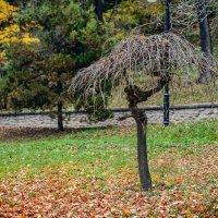 Осень :: Alexey Bartenyev