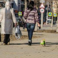 3 женщины... :: Алексей Бортновский