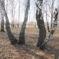 Прозрачный лес. :: Михаил Попов