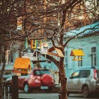 Кафешки для птиц :: Антон Родионов
