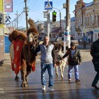 Верблюд в городе :: Анатолий