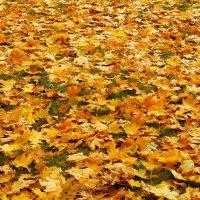 Ковер из желтых листьев ... :: Serega Денисенко