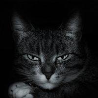Кошечка :: Дмитрий Кошкаров