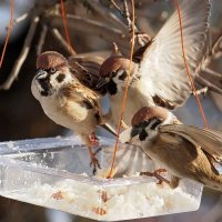 Кстати о птичках... А сегодня наш праздник ! :: Александр Резуненко