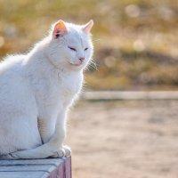 Сидела кошка на крылечке... :: Анатолий Клепешнёв