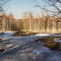Весенний мотив :: Владимир Буравкин