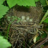 Гнездо :: Наталья Березко