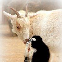 Мама с младенцем :: Alexander