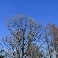Загородный парк,скоро зашумят листвой :: Сергей Цветков