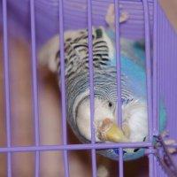 Свободу попугаям! :: Сергей Щербаков