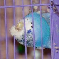 Свободу попугаям 2 :: Сергей Щербаков