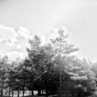 Утро в лесу :: Виктория Власова
