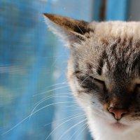 солнечная кошка :: кейт соло