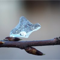 Опять зима? :: Swetlana V