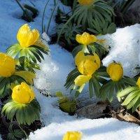 Зима вернулась в марте :: Swetlana V