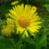 Жёлтые цветы :: Татьяна Лютаева