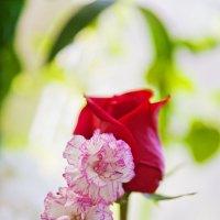 Цветы :: Татьяна Губина