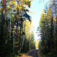 дорога в лесу :: Наталья Ивашевская