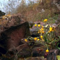 И на камнях растут деревья. :: Сибирь Эвенкия Евгений Щербаков