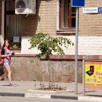 Иисус торговцев не любил... :: Владимир Болдырев