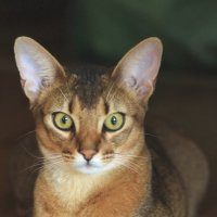 Его величество Кот! :: Наташа Шамаева