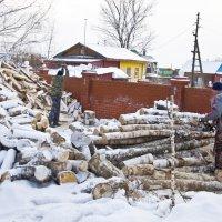 Заготовка дров. :: Андрей Синицын