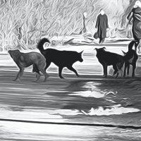 Стая бродячих собак :: Весна .