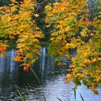 Осень :: Алексей Жуков