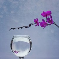 Вино из орхидей :: Ирина Приходько
