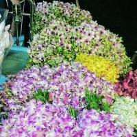 Орхидеи :: Наталья Нарсеева