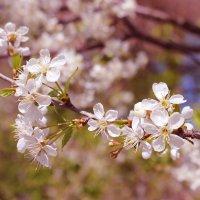 весна :: Юлия Круглякова