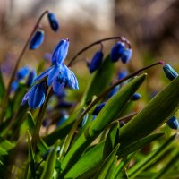 Цветы :: Александр Кореньков
