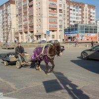 Живой транспорт :: Михаил Сергеевич Карузин
