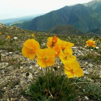 горы. горные цветы :: Горный турист Иван Иванов