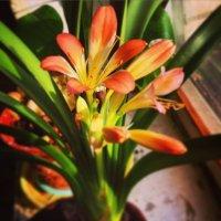 Цветут цветы :: Екатерина Василькова