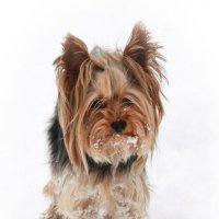 Собака-друг человека :: Катя Раймер