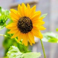 Под жарким индийским солнцем ... :: Михаил Юрин