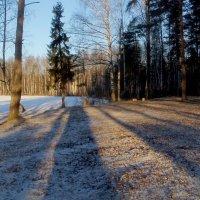 Сегодня на пустой поляне..... :: Юрий Цыплятников
