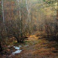Весны заветные тропинки... :: Лесо-Вед (Баранов)