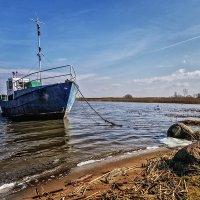 Куршский залив :: Владимир Самсонов