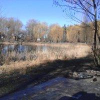 Берег озера :: Сергей Гвоздев